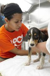 ASPCA (The American Society for the Prevention of Cruelty to Animals)