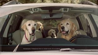 "Subaru Dog Tested spot, ""Car Wash"" – See what happens when small dogs wash a big Subaru."