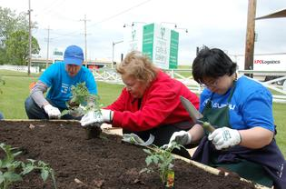 Elaine Bock (center) Manager of Lambs Farm Magnolia Cafe & Bakery with Subaru Volunteer (left) and Lambs Farm Participant (right) planting.