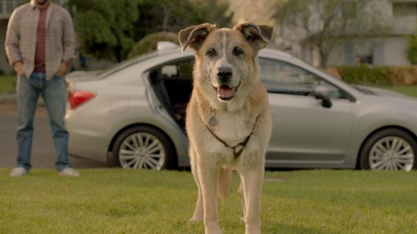 2018 subaru dog commercial. unique commercial and 2018 subaru dog commercial