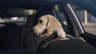 "Subaru Dog Tested spot, ""Driving Lesson"" – See what happens when Teen Barkley learns how to parallel park."