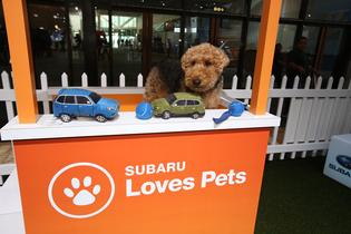 Subaru Partners with Philadelphia Animal Welfare Society and Morris Animal Refuge to Host First-Ever Pet Adoption Event Inside Booth at the 2019 Philadelphia Auto Show