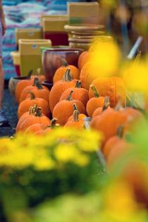 Subaru and Greensgrow Farms Partner to Celebrate the Season at the Subaru Fall Festival