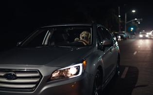 "THE RETURN OF THE BARKLEYS: SUBARU LAUNCHES NEW ""DOG TESTED. DOG APPROVED."" TV AD CAMPAIGN, STARRING AMERICA'S FAVORITE CANINE FAMILY"